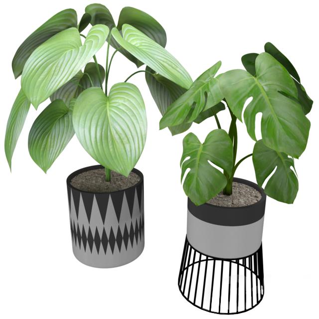 Растение для декора