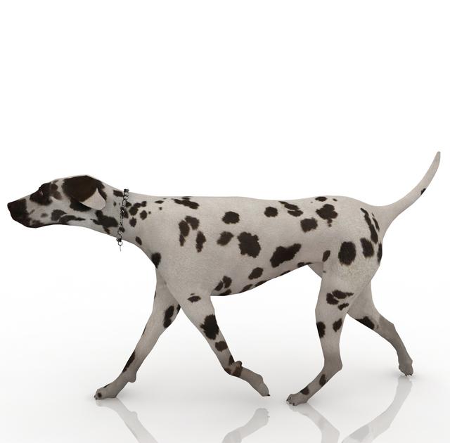 Собака далматинец