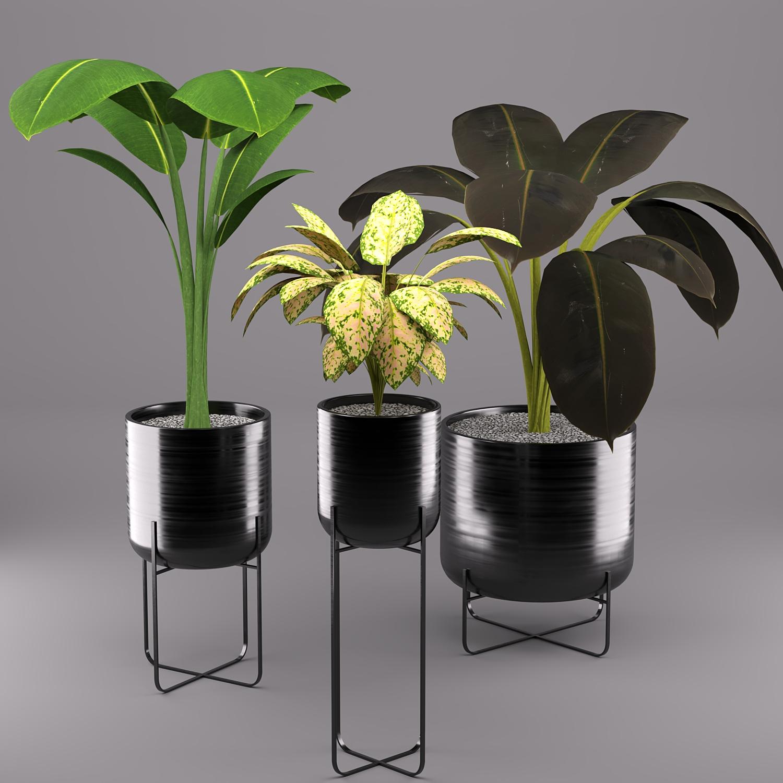 3d модель Декоративные растения